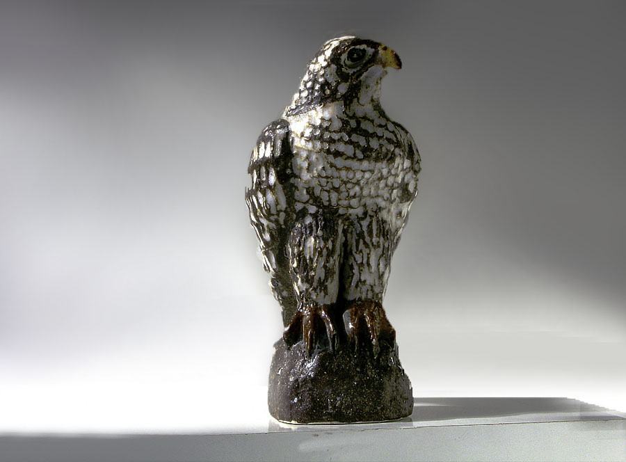 Falcon by Iain Andersen